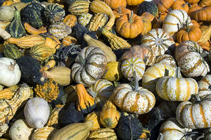 Assortment of gourds